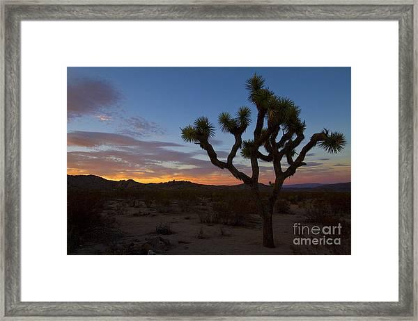 Joshua Tree Sunset Framed Print