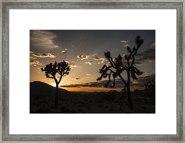 Joshua Tree Sunset Silhouette 2 Framed Print