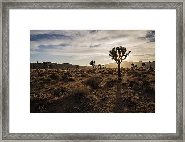 Joshua Tree Sunset Silhouette Framed Print