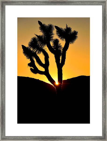 Joshua Tree Sunset Framed Print