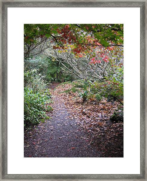 Framed Print featuring the photograph Journey by Barbara Von Pagel