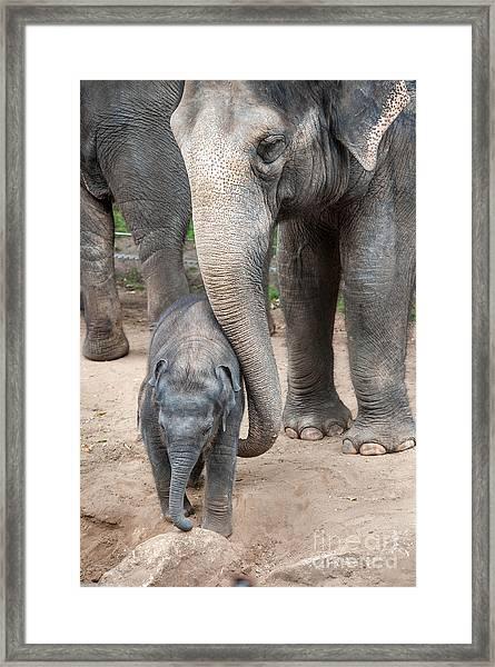 Jumbo Love Framed Print