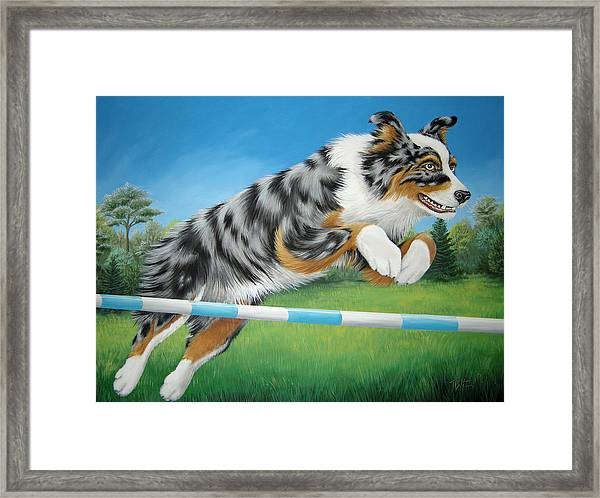 Jumping Aussie Framed Print