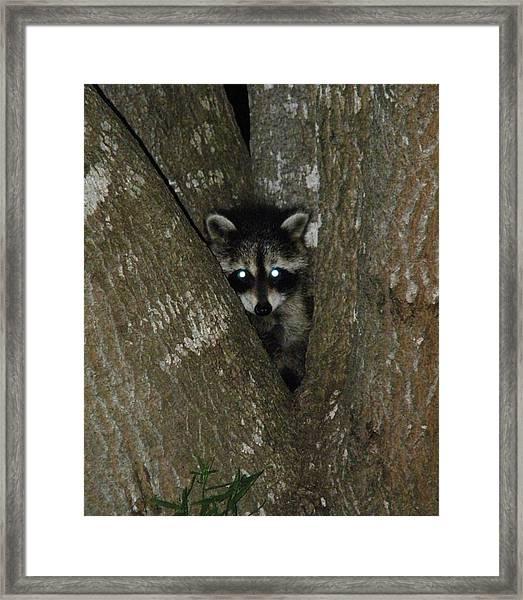 Baby Raccoon And Jesus Framed Print