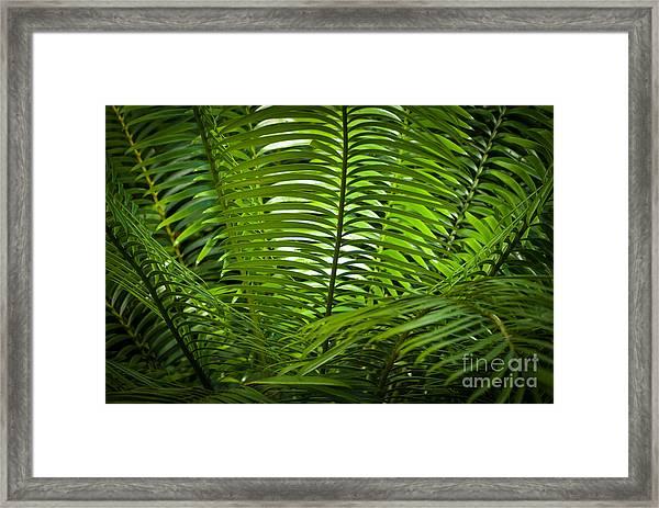 Jungle Fern Framed Print