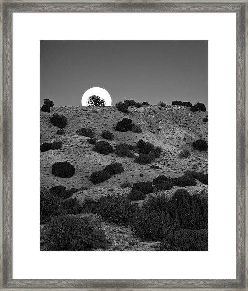 Juniper At Moonrise Framed Print