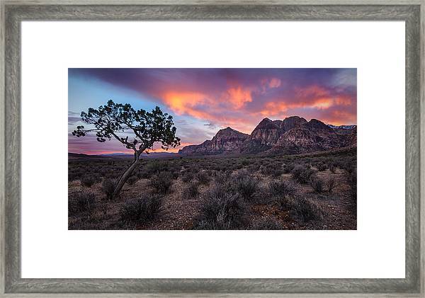 Juniper Sunset Framed Print