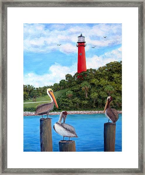 Jupiter Inlet Pelicans Framed Print