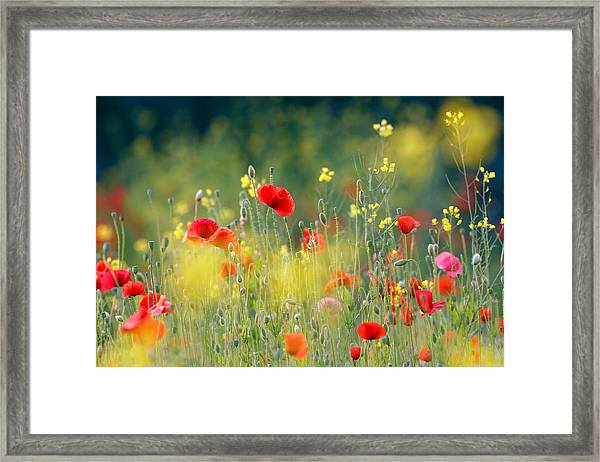 Just A Perfect Day Framed Print