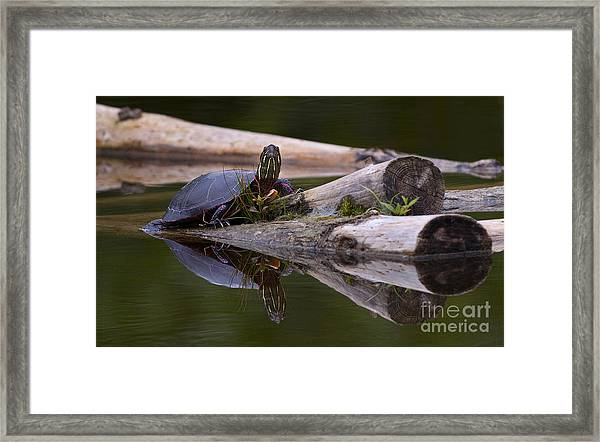 Just Chillin.. Framed Print