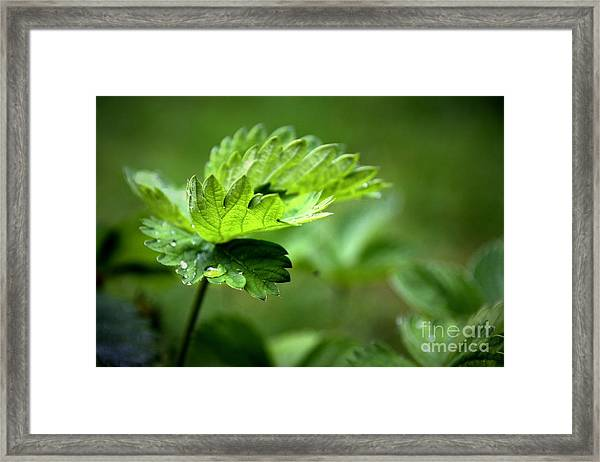 Just Green Framed Print