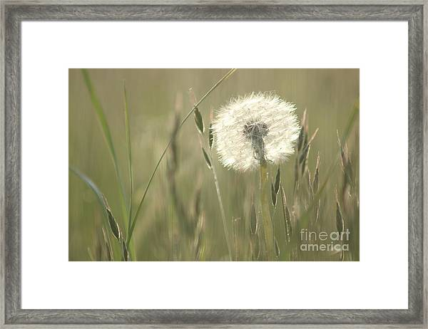 Just Like Cotton Wool Framed Print