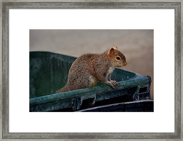 Just Looking For My Nuts Framed Print