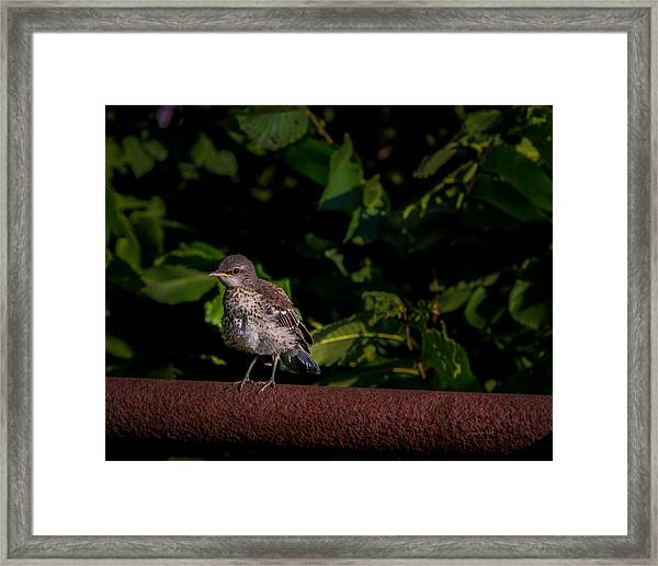 Just Out Of The Nest Framed Print