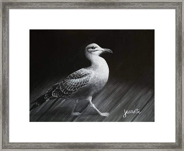 Juvenile Gull Framed Print