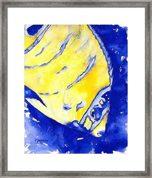 Juvenile Queen Angelfish Framed Print