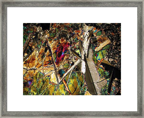 Jungle Dusk Framed Print
