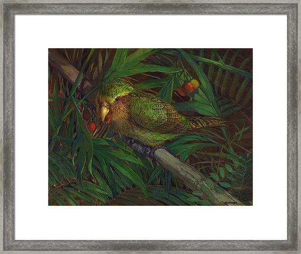 Kakapo Nighttime Feeding Framed Print by ACE Coinage painting by Michael Rothman