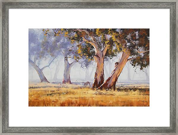 Kangaroo Grazing Framed Print