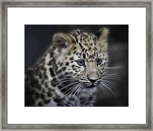 Kanika - Amur Leopard Portrait Framed Print