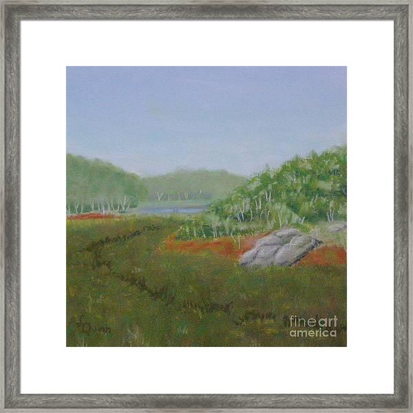 Kantola Swamp Framed Print