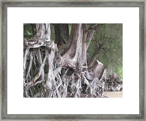 Kauai - Roots Framed Print