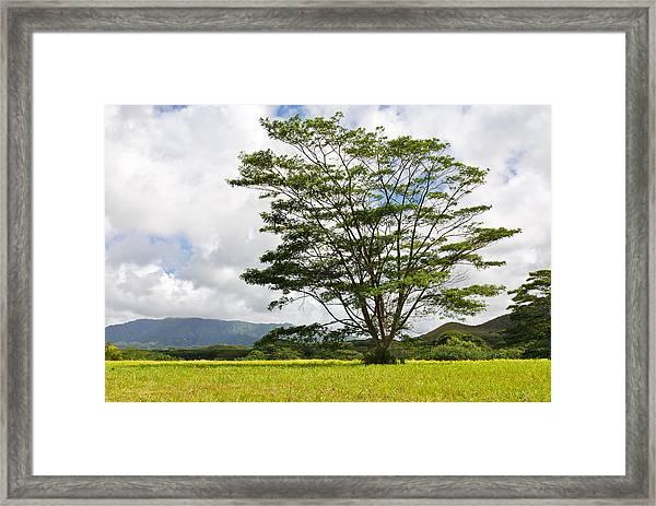 Kauai Umbrella Tree Framed Print
