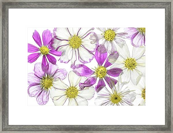 Keeping Summer Framed Print by Mandy Disher