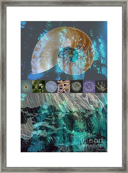 Kelp Forest Framed Print