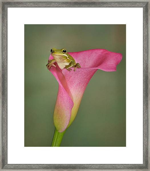 Kermit Peeking Out Framed Print