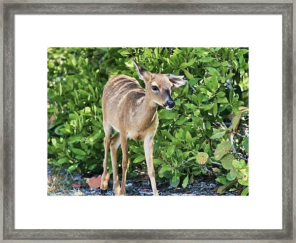 Key Deer Cuteness Framed Print