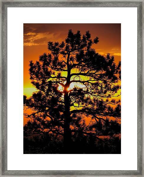 Keystone Pine Framed Print