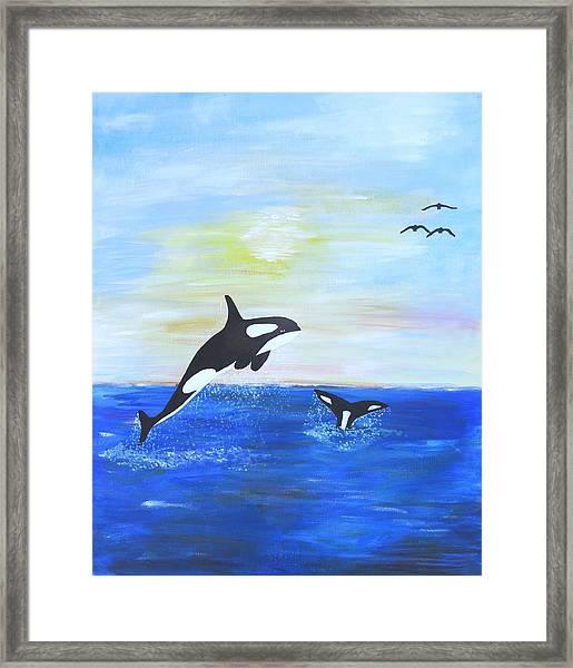 Killer Whales Leaping Framed Print