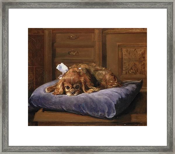 King Charles Spaniel Oil Framed Print