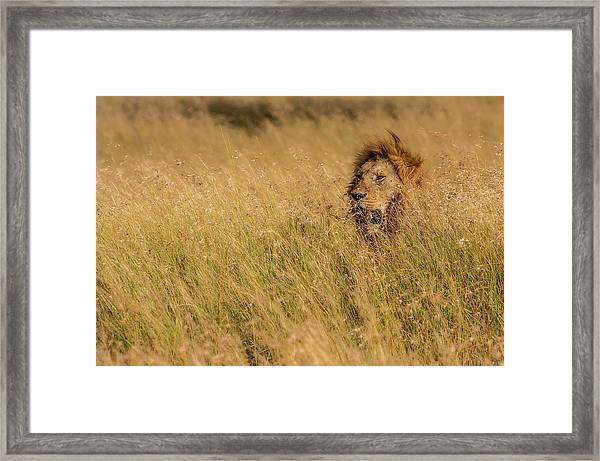 King Framed Print