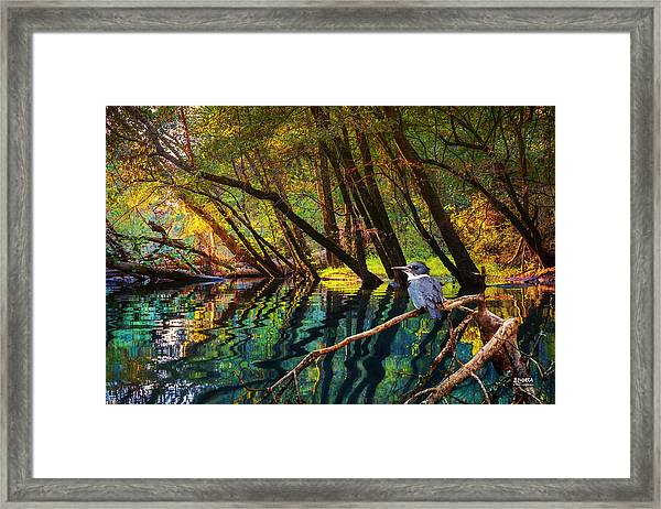 King Of North Chick Framed Print