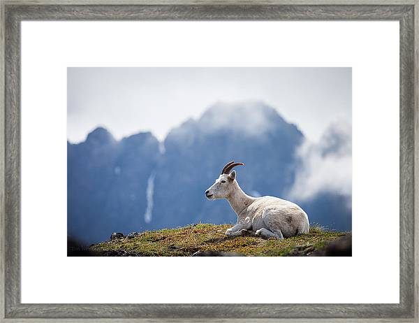 Mountain Prince Framed Print