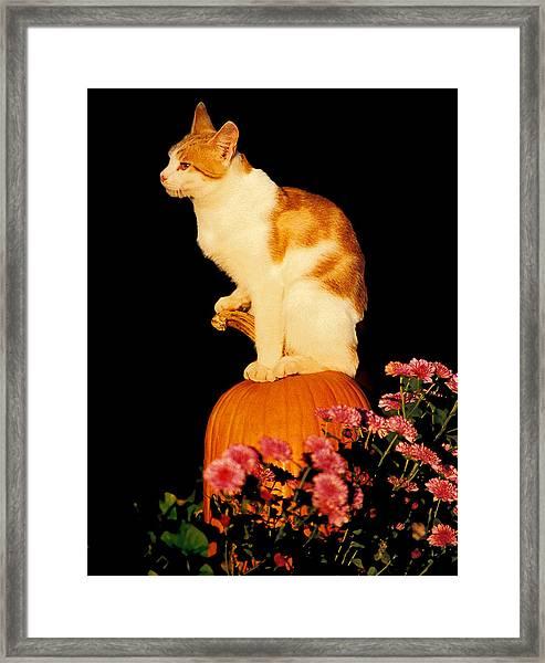 King Of The Pumpkin Framed Print