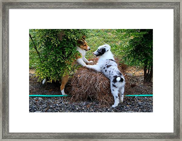 King On The Mountain Framed Print