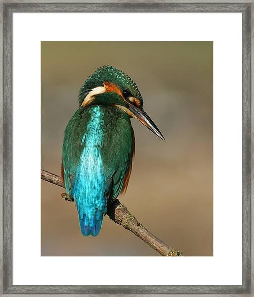 Kingfisher1 Framed Print