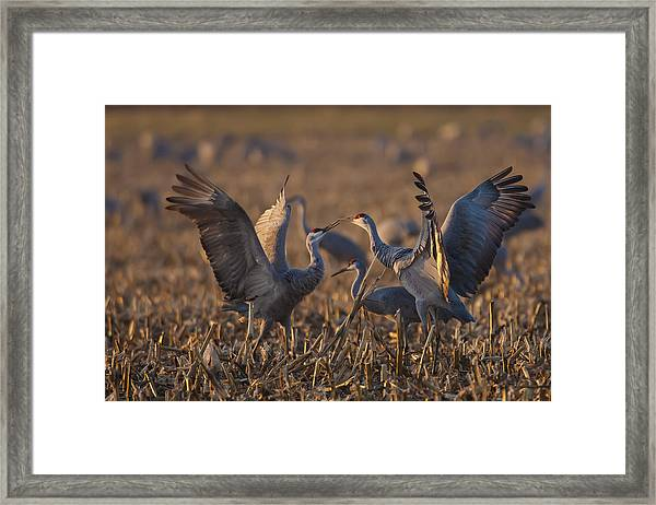 Kissing Sandhills Framed Print
