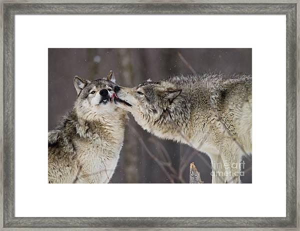 Kissy Face Framed Print