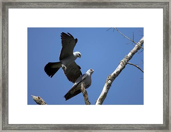 Kites In Love Framed Print