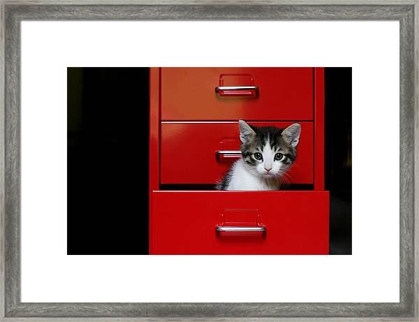 Kitten In A Red Drawer Framed Print