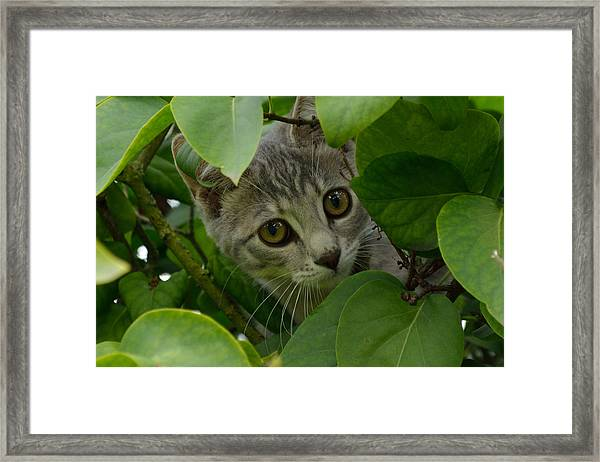 Framed Print featuring the photograph Kitten In The Bushes by Scott Lyons