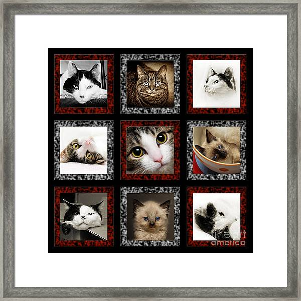 Kitty Cat Tic Tac Toe Framed Print