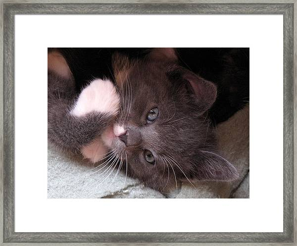 Kitty Cuteness Framed Print