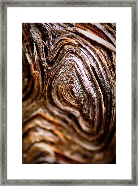 Knots Framed Print
