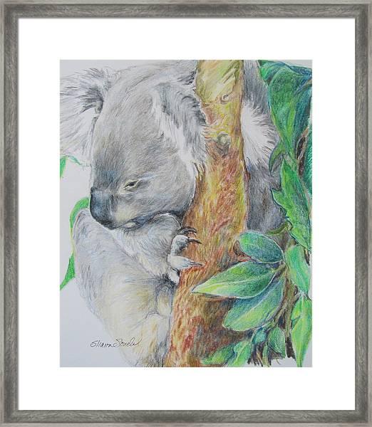 Koala Nap Time Framed Print