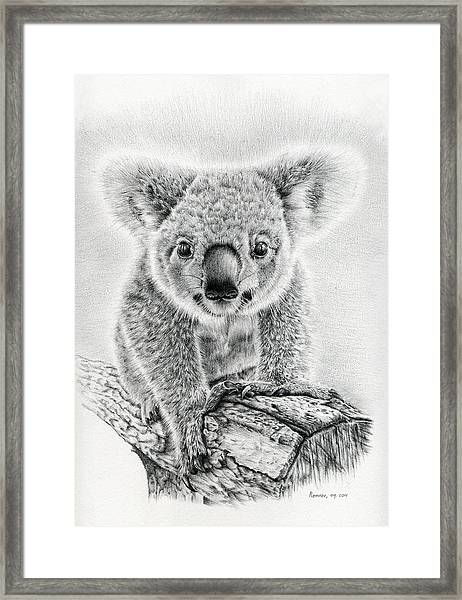 Koala Oxley Twinkles Framed Print